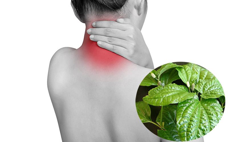 lá lốt trị đau cột sống lưng