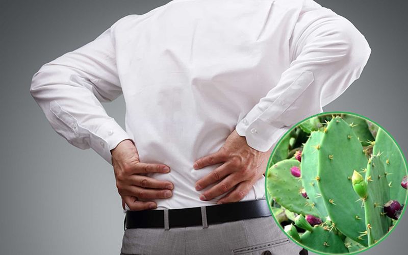 Bài thuốc chữa thoái hóa cột sống lưng