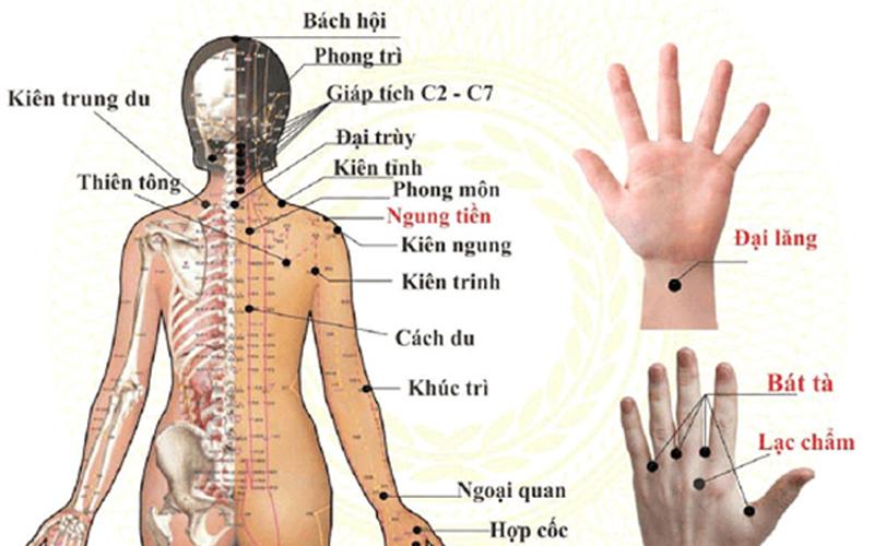 Cách xác định huyệt đạo vùng vai gáy