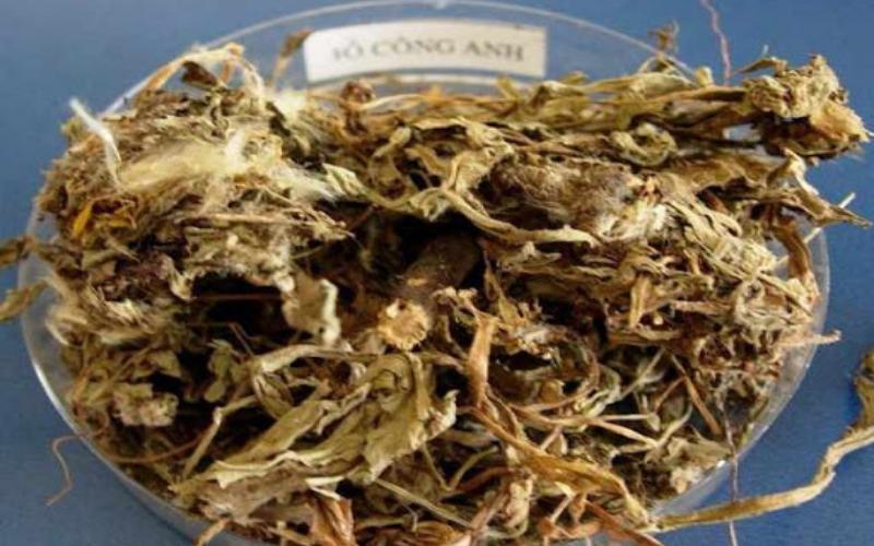 Bồ Công Anh khô làm thuốc rất tốt cho sức khoẻ
